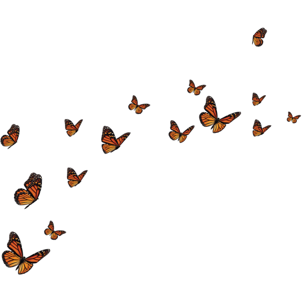 Driver-Passenger-Set-Monarch-Butterfly Migration decals