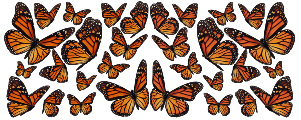 Monarch-Migration orange black butterflies Decals